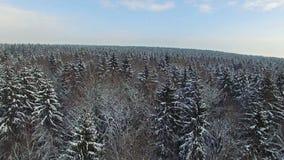 4K Vlucht boven sneeuw de winterbos op het noorden, luchtmening stock video