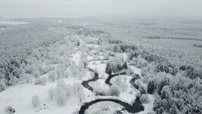 4K Vlucht boven wilde windende rivier en de bevroren bossnowly-winter op het noorden Lucht panorama stock video