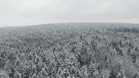 4K Vlucht en start boven de winterbos bij sneeuwval op het noorden, luchtpanorama stock videobeelden
