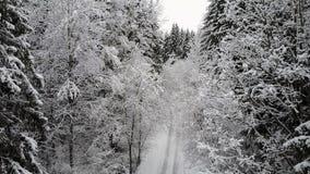 4K Vlucht en start over plattelandsweg in bevroren de winterbos tussen takken Lucht panorama stock video