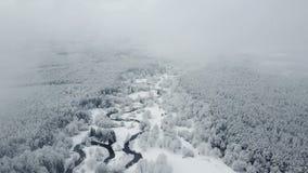 4K Volo sopra il fiume selvaggio di bobina in foresta congelata a tempo nebbioso Inverno di Snowly sul Nord Vista panoramica aere video d archivio