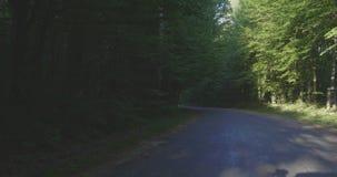 4K - Waldweg, der vorwärts führt stock video footage