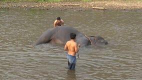 4K Weergeven van de mens die van Mahout en van de toerist en de olifant in rivier wassen baden stock videobeelden