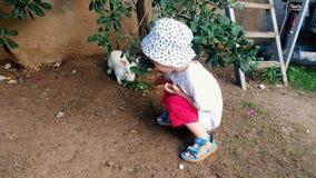 4k wideo uroczej 2 lat berbecia chłopiec żywieniowy królik z liśćmi zdjęcie wideo