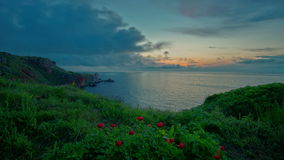 4k Wonderful seascape view with wild peonies on the beach in Yailata reserve, Bulgaria stock video