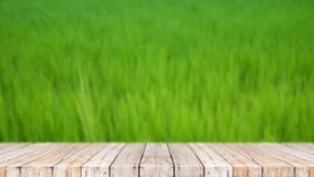4K Wood floor against nature green field abstract background stock video footage