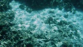 4k zwolnionego tempa wideo rusza si? nad raf? koralow? na piaskowatym dennym dnie kamera zbiory