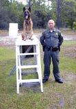 k9 policja Zdjęcia Stock