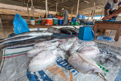 Kałamarnica przy rybim rynkiem w Muttrah, Oman Obrazy Royalty Free