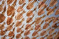 Kałamarnica, susząca słońcem Obrazy Royalty Free