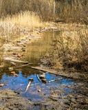 Kałuża na lasowej drodze z odbiciami obrazy stock