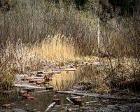 Kałuża na lasowej drodze z odbiciami zdjęcia stock