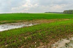 Kałuża na polu. zdjęcia royalty free