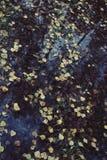 Kałuża w jesień lesie zdjęcie stock