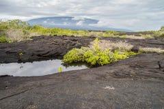 Kałuża w law skałach na Fernandina zdjęcie royalty free