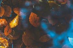 Kałuża w lesie z jesień liśćmi Obraz Stock