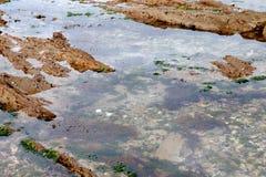 Kałuża woda na skale przy niskim przypływem zdjęcie royalty free