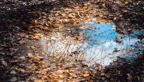 Kałuża z spadać jesień liśćmi obraz royalty free