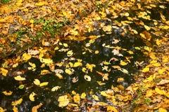 Kałuża zakrywająca z jesień liśćmi obrazy stock