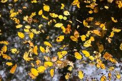 Kałuża zakrywająca z jesień liśćmi fotografia royalty free