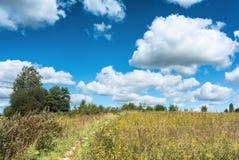 Łąka z żółtym wildflowers krajobrazem Fotografia Stock