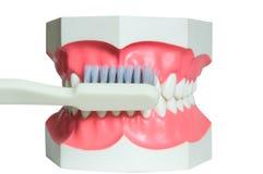 Kaak en tandenborstel Stock Foto's
