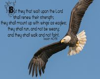 Kaal Eagle Bible Verse royalty-vrije stock foto