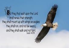 Kaal Eagle Bible Verse stock foto