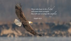 Kaal Eagle Bible Verse stock afbeelding