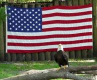 Kaal Eagle en Amerikaanse Vlag Stock Fotografie