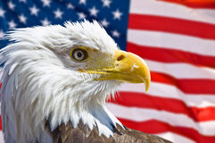 Kaal Eagle Head Royalty-vrije Stock Afbeelding