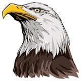 Kaal Eagle op wit stock illustratie