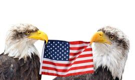 Kaal Eagles houdt in de bek van de Vlag van Verenigde Staten stock foto's