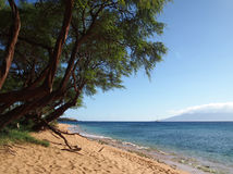Kaanapali Beach with gentle waves royalty free stock image