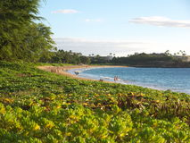 Kaanapali beach in Maui Hawaii. People in the distance walking on a beautiful beach.  Blue sky, the ocean at the right and tropical plants on the left. Located Royalty Free Stock Photography