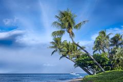 Kaanapali Beach Palm. Morning photograph of Maui`s famous Kaanapali beach taken next to the surf royalty free stock photo