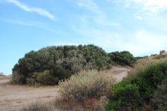 Kaap Sounion van het zuidelijke deel van vasteland Griekenland 06 20 2014 Marien landschap en landschap van de woestijnvegetatie  Stock Afbeelding