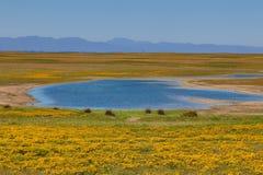 Kaap Wilde Bloemen royalty-vrije stock foto's
