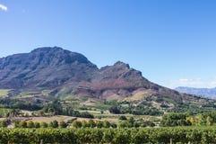 Kaap Winelands Stock Fotografie