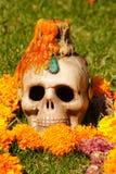 kaars en schedel Royalty-vrije Stock Fotografie