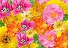 Kaart, bloemenachtergrond in vrolijke kleuren Stock Fotografie