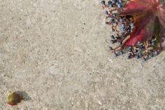 Kaart met de herfstbladeren Royalty-vrije Stock Foto's
