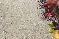 Kaart met de herfstbladeren Royalty-vrije Stock Foto