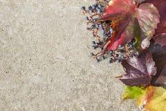 Kaart met de herfstbladeren Stock Foto's