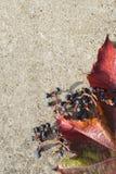 Kaart met de herfstbladeren Royalty-vrije Stock Fotografie