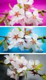 Kaart met de lentebloesem Stock Foto