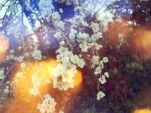 Kaart met de lentebloesem Royalty-vrije Stock Foto's
