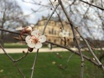 Kaart met de lentebloesem Stock Afbeelding