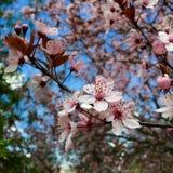 Kaart met de lentebloesem stock afbeeldingen