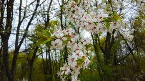 Kaart met de lentebloesem Royalty-vrije Stock Foto